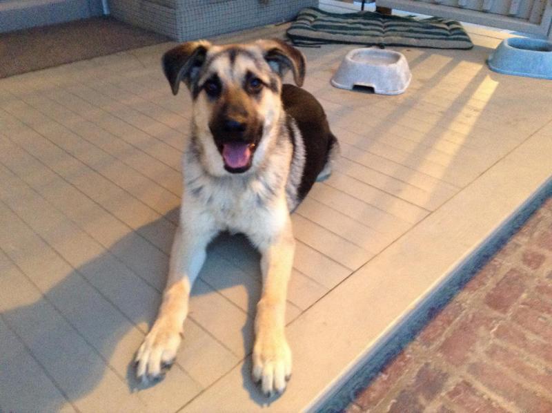 Meet Toby!!-1966870_264906823685047_1294058277_n.jpg