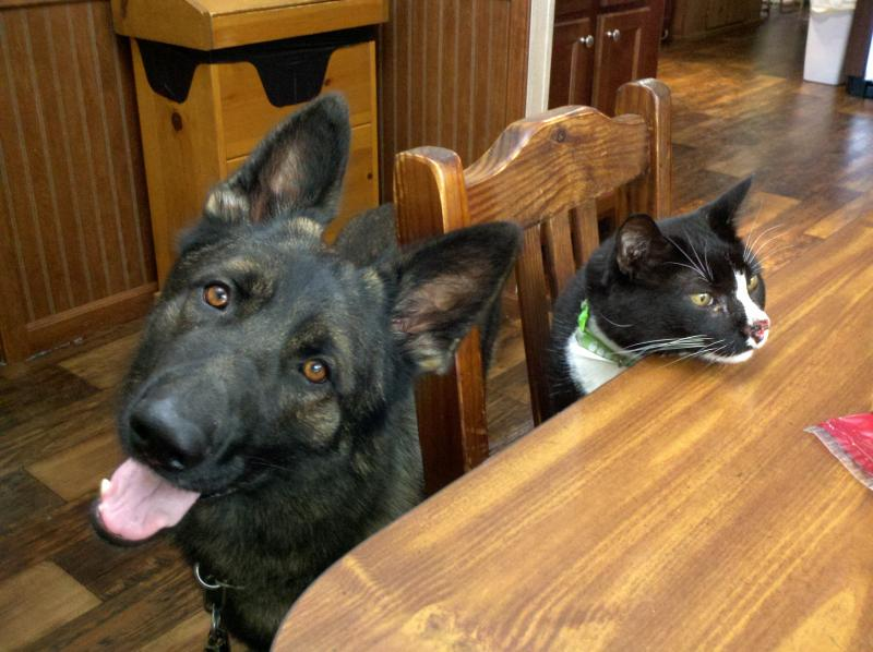 Schutzhund training and cats?-2012-05-31_12-43-35_294.jpg