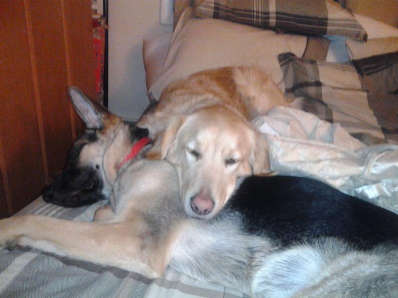 Let's all take a nap <3-2012-06-02-23.44.55.jpg