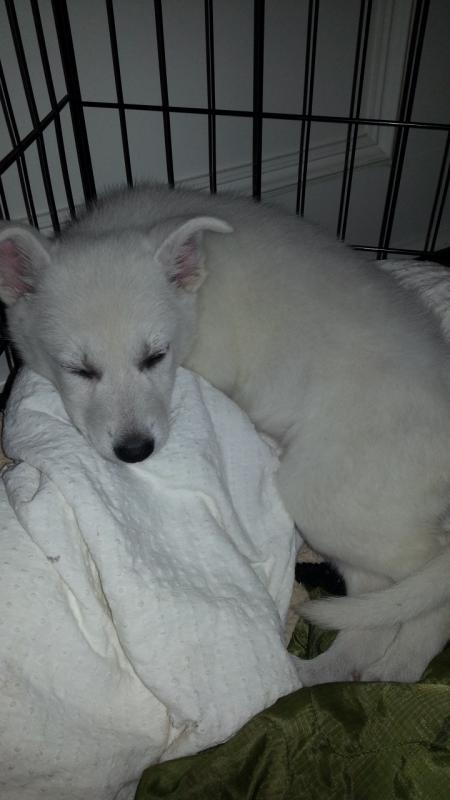 7 Weeks old from North Houston-20121227_112412.jpg