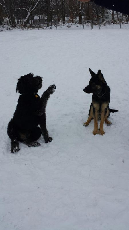 Snow day and a new friend-20131216_113715.jpg