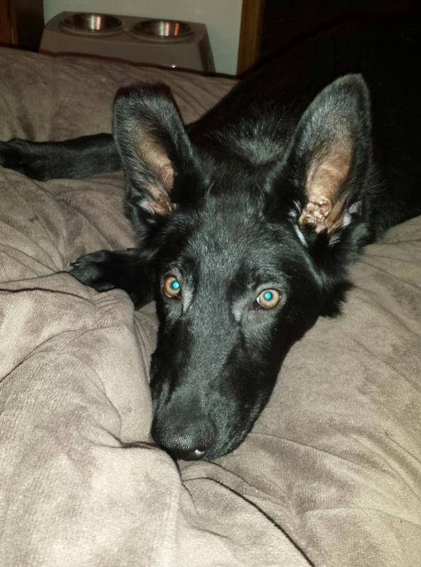 Beth here with Jack - my Black GSD-20131222_121849-1.jpg