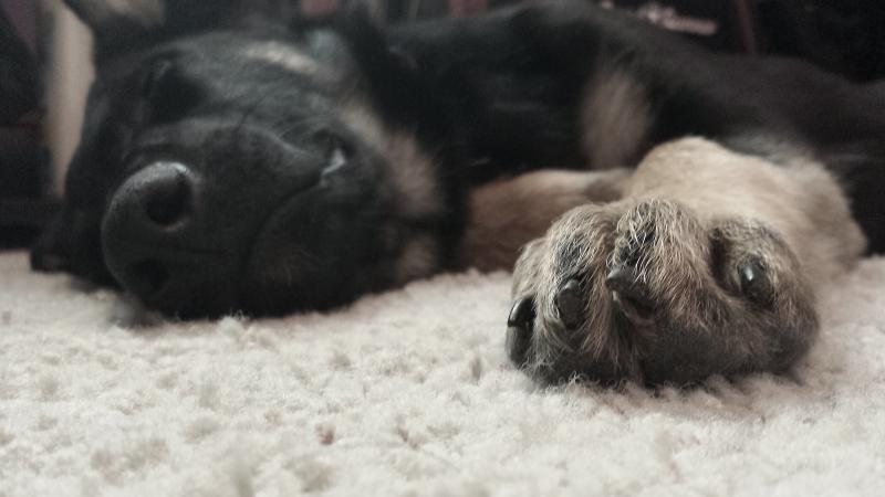 My puppy Thor! :)-2014-05-09-16.19.57.jpg