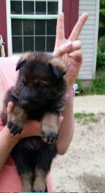 New pup!-2014-06-08-21-14-55_resized.jpg
