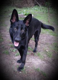 Beth here with Jack - my Black GSD-2014-07-15-17.42.25.jpg
