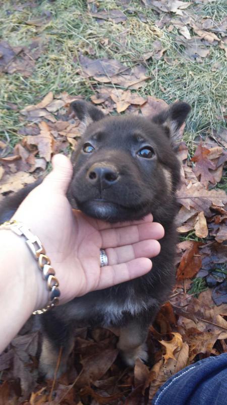 My boy Zeus-20140114_144610.jpg