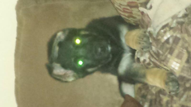My boy Zeus-20140131_155153.jpg
