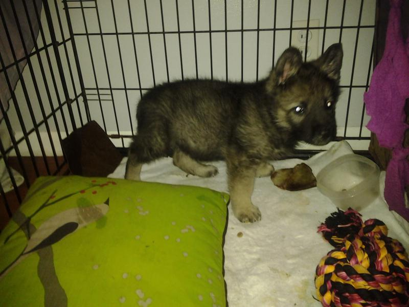 My Puppy! 3 to 10 wks-20140424_224515.jpg