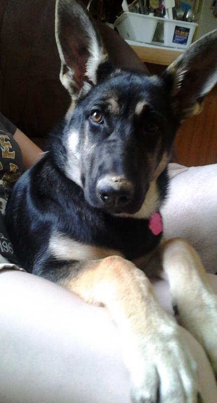 SHOW ME your black coat/black blanket puppies!!-20140709_140537.jpg