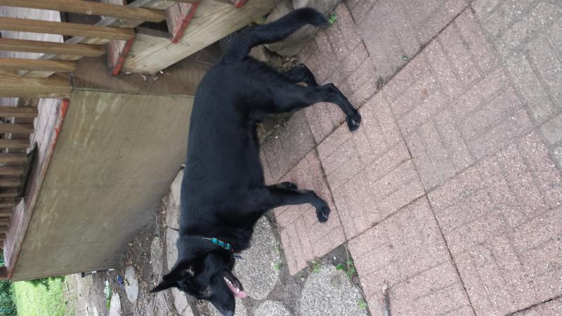 Beth here with Jack - my Black GSD-20140715_173527.jpg