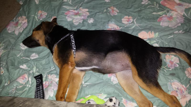 my new puppy-20140806_233536.jpg