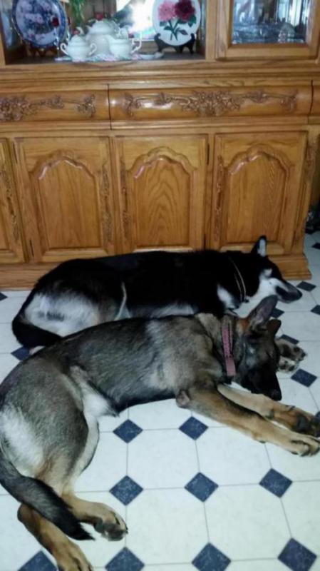 Lobo is 85 lbs, at 6 1/2 months!!!-20141019_133713_1417308036182.jpg