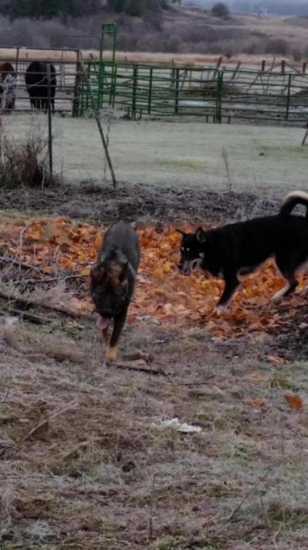 Lobo is 85 lbs, at 6 1/2 months!!!-20141124_115043_1417308069351.jpg