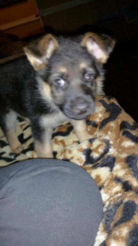Lazy eye pup??-20150626_003416_1435312752349.jpg