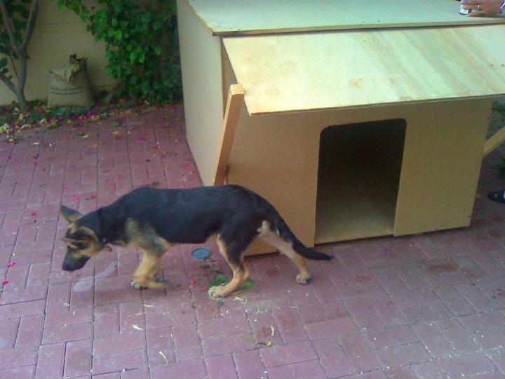 How To Train A German Shepherd Dog Videos