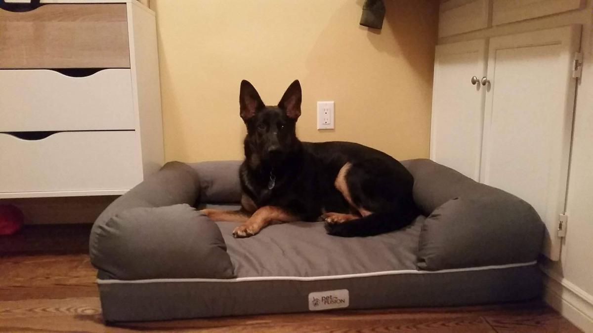Dog Bed Preferences?-22292228_10159390526210076_1359767873_o.jpg