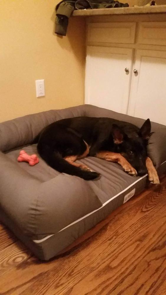 Dog Bed Preferences?-22311845_10159390525495076_671672425_o.jpg