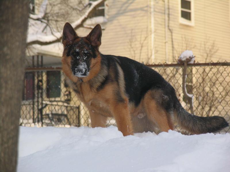 Drake in the snow-2250.jpg