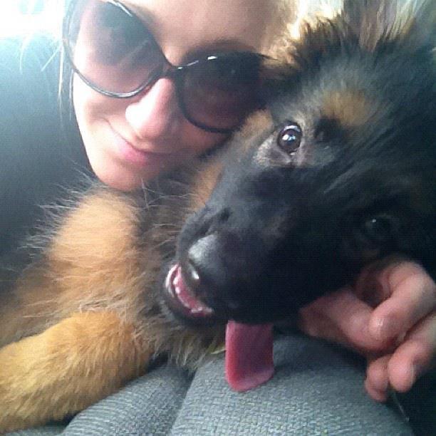 RIP Akira, my sweet girl... </3-295202_10151400732464852_1142636908_n.jpg