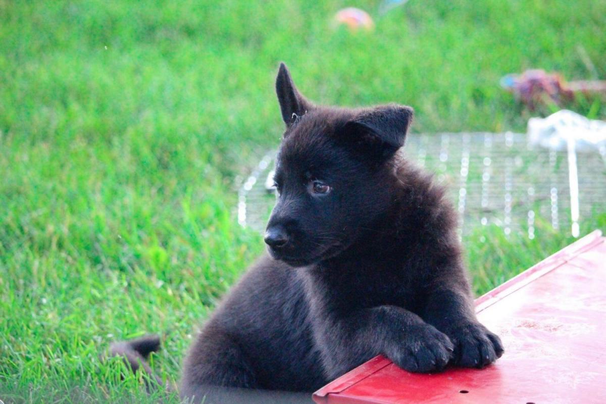 Pup comes home in one week!-315ab590-582c-4855-91c6-fb2e55b3d56d_1529714410223.jpg