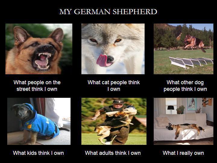 What German Shepherds Do German Shepherd Dog Forums