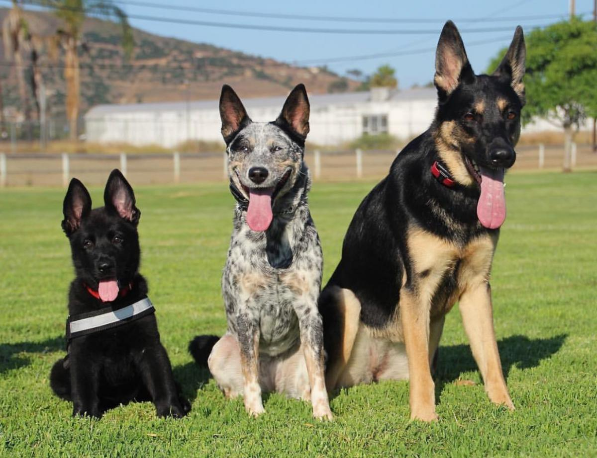 Pup comes home in one week!-495953df-de96-4bb0-b0f5-39ca87bc0ce7_1531153347847.jpeg