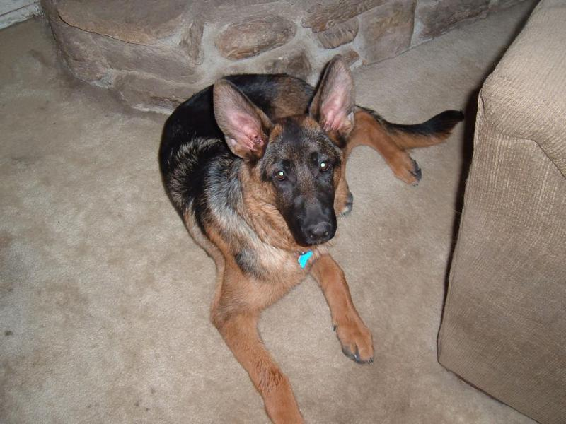 He's a water dog!-5-months2.jpg