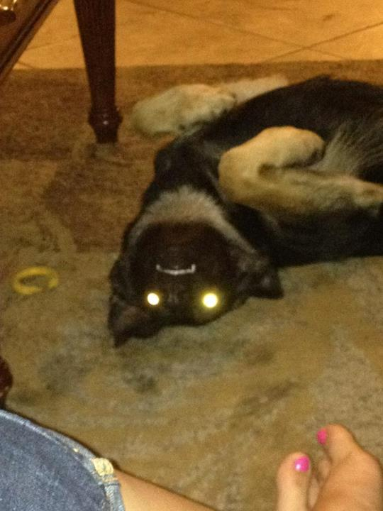 "Let's see those ""laser eyes"" pics-522068_10150709011694748_603379747_9491768_517620011_n.jpg"