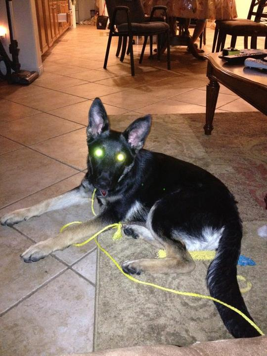 "Let's see those ""laser eyes"" pics-561929_10150713027014748_603379747_9508593_345960177_n.jpg"