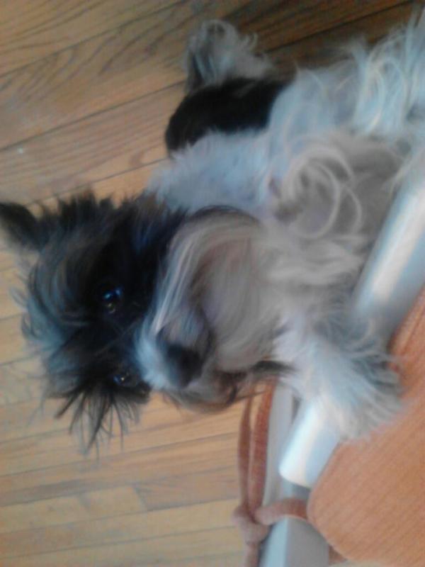 Dog No.5-574473_3809869296165_210436442_n.jpg