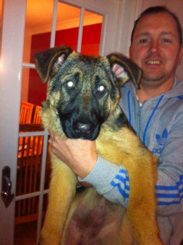 New Member from UK 15 week old GSD - vet advised slightly underweight at checkup-598605_10151329372094108_1240586895_n.jpg
