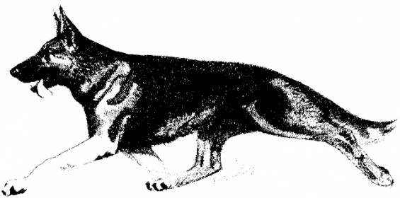 Dog sample-5a658176-da9f-4167-9a3d-e7b7372ef9b9.jpg
