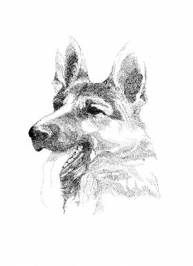Dog sample-5d403405-8143-43ea-aff1-cfa241e37202.jpg