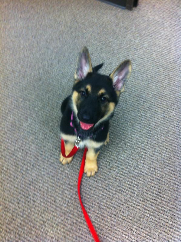 Isn't Athena a pretty girl? -3 month-8.jpg