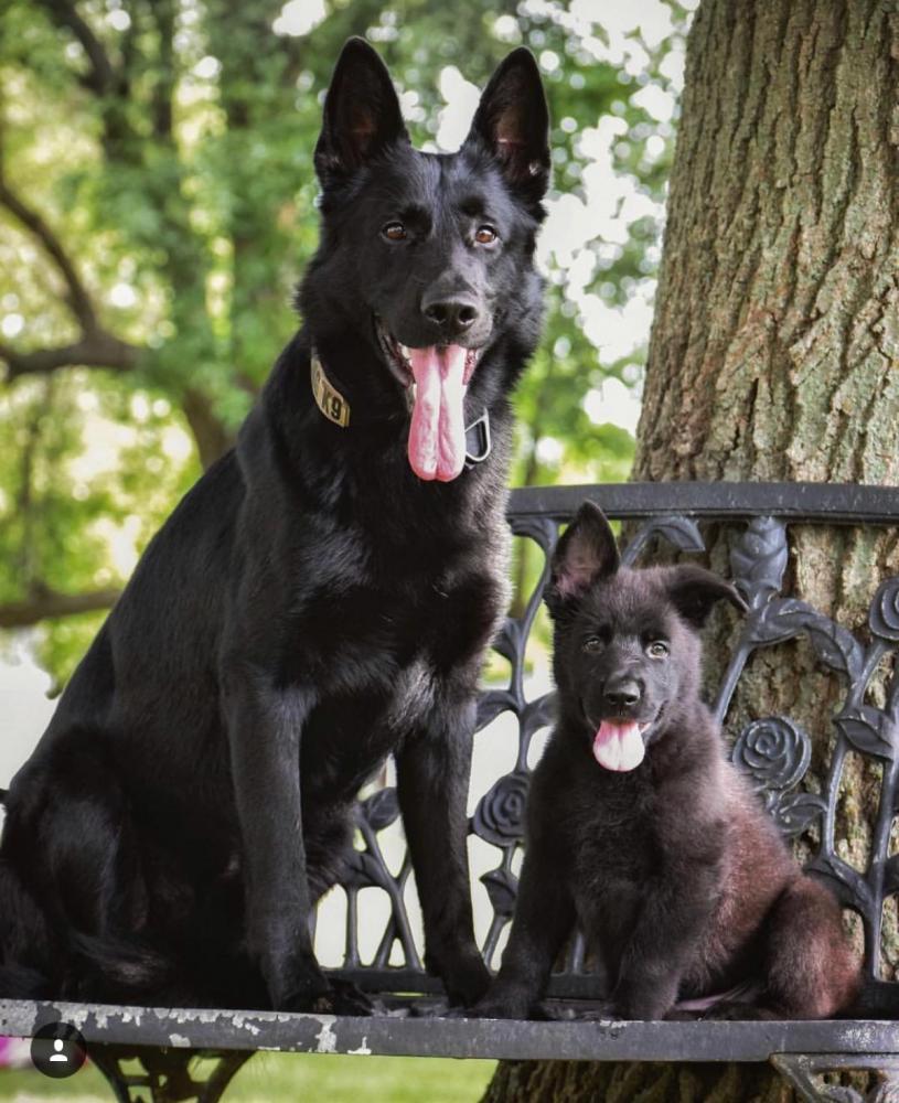 Pup comes home in one week!-8dec2a5c-d44a-41ec-81f8-d27c0582c19f_1530803898170.jpg