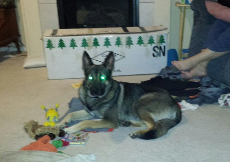 10 month old Gsd. weight issues-960102_10202442995183511_1336547576_n.jpg