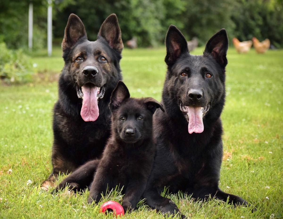 Pup comes home in one week!-98e257a4-5f23-41b9-93cc-bdb6eb01280e_1530803832212.jpg