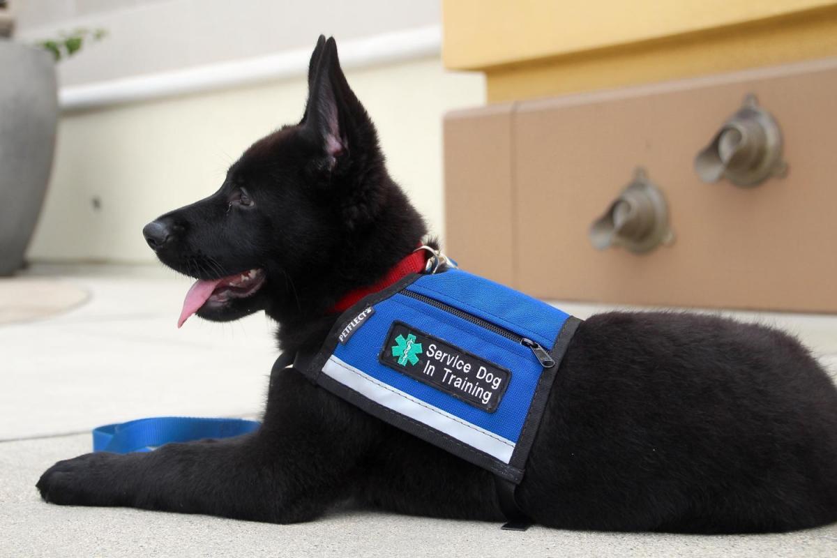 Vasko's service dog training-9c69df84-ddef-4fee-a398-e82edded3572_1531787533304.jpg