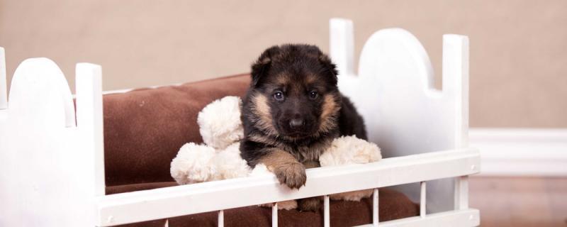 Puppy Agnes 3 weeks to 10 wks EARS!-agnes-3-weeks.jpg