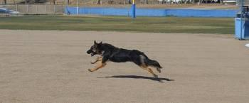 SHOW ME your dog in the air-axel-flying.jpg
