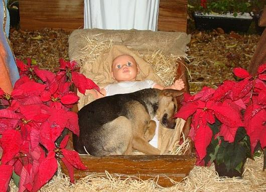 Baby Jesus gets a surprise cuddle...-babiesnativity.jpg
