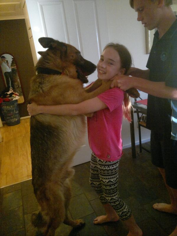 My male GSD is 39.2 kg and under weight 20 months old-buster-hugging-jessica.jpg