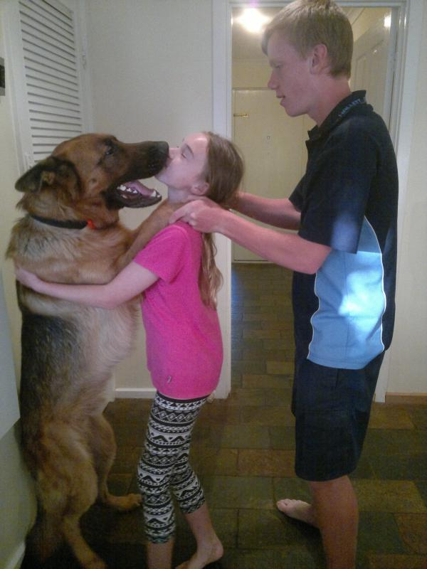 My male GSD is 39.2 kg and under weight 20 months old-buster-standing.jpg