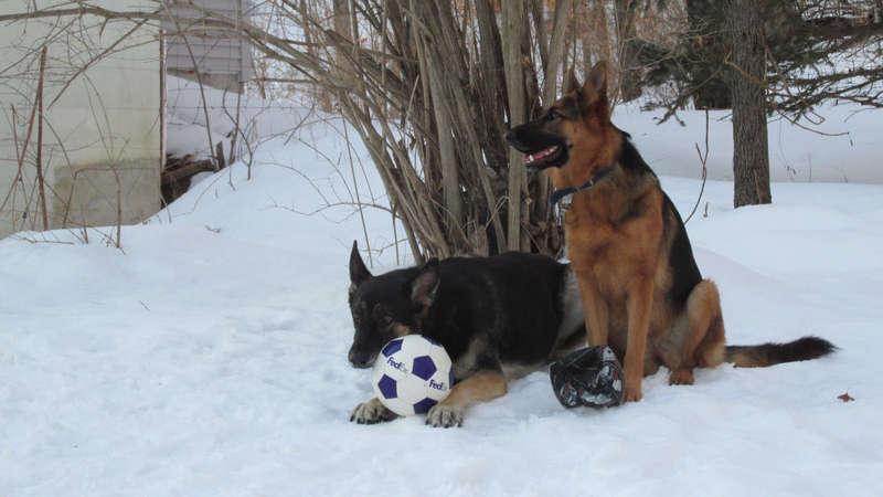 My kids!-canines.jpg