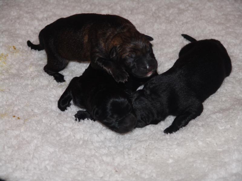 2 Day Old Boy & Capri Pups- Just a Few Pics-capri-boy-pups-7-29-023.jpg