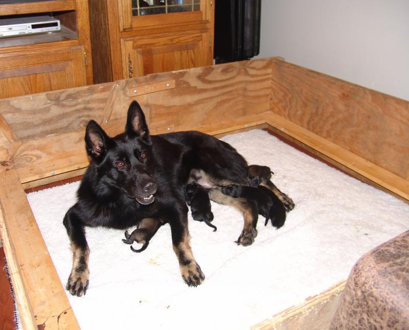 2 Day Old Boy & Capri Pups- Just a Few Pics-capri-boy-pups-7-29-031.jpg
