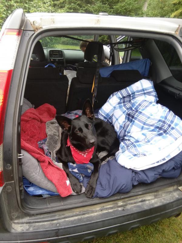Caprica's first camping trip!-caprica2.jpg