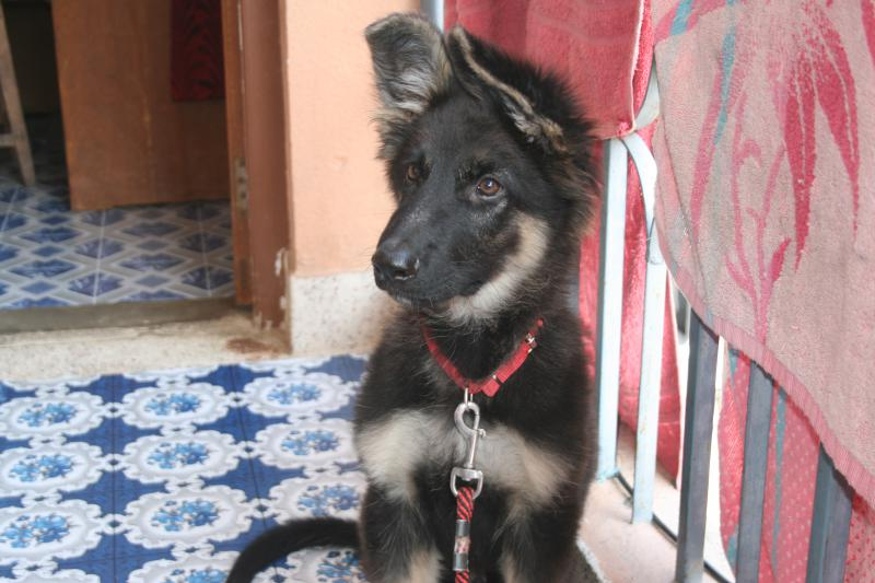 10 week old ears! Almost there!!-chobar-010.jpg