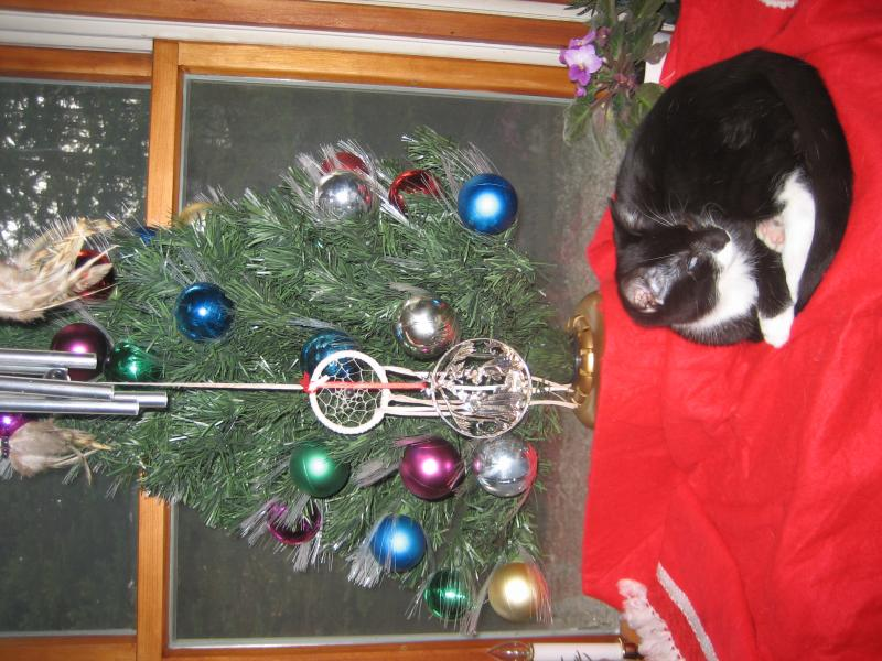 Should I skip the Christmas Tree this year?-clean-up-camera-8-16-12-447.jpg