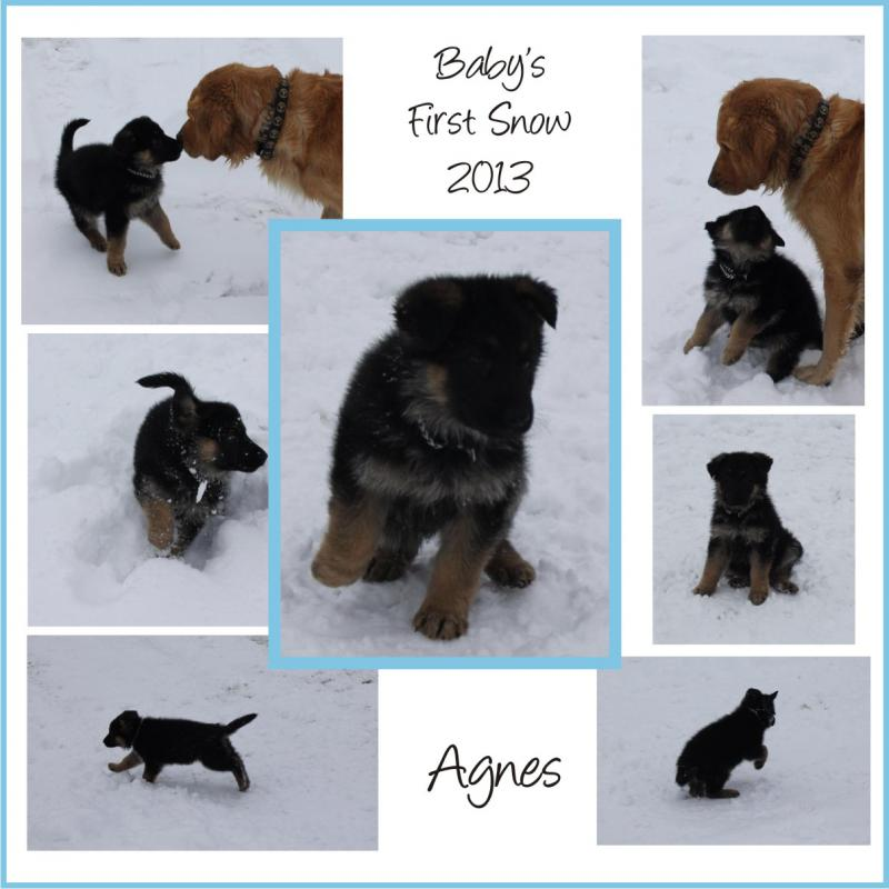 Aggie's First Snow!-collage-1.jpg